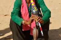 Snake Charmer at Pushkar Fair - by V Pavlicic Photo Contest 2017 Honourable Mention