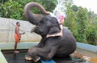 David McKane taking an elephant shower in South India