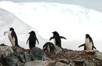 The Antarctic's wildlife is incredibly abundant!
