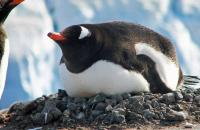 Meet huge conlonies of penguins and enjoy close encounters with wildlife!