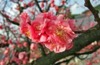 A beautiful blossom captured on Gilda's visit to her heritage land, Japan!
