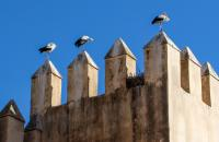 Storks in Fez by Gwen Morse (in Fez, Morocco in Oct 2019)