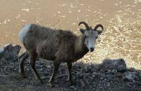 On Joilyn's travels in Western Canada, wildlife galore!