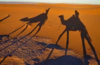 Go on a camel ride in the desert, an experience that will change you!