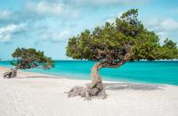 Famous divi trees of Aruba - Credit Holland America Line