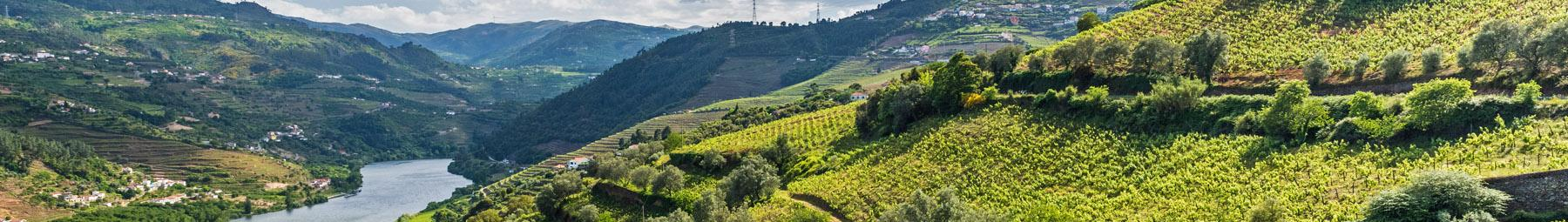 Lush vineyards on the Douro River.